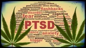 Cannabis for PTSD