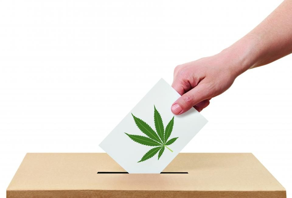 voting for marijuana