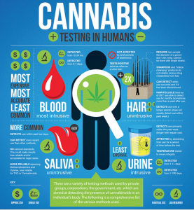 cannabis testing in humans